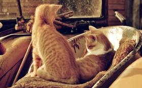Обои металлические, кота, рыжих, предметы, Два, свалка
