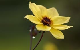 Картинка bokeh, flower, лепестки, focus, боке, 1920x1080, цветок