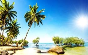 Обои песок, море, пляж, тропики, пальмы, берег, summer