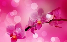 Обои блики, ветка, розовые, орхидеи