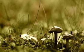 Обои гриб, трава, природа, растения, зелень, земля, макро