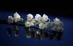 Обои цветы, голубое, ландыши