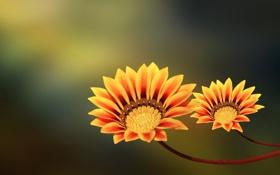Обои стебель, лепестки, цветы