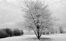 Обои снег, деревья, пейзаж, природа, Зима