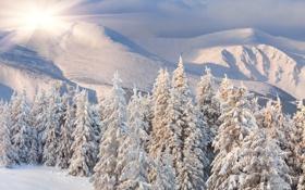 Обои зима, лес, солнце, снег, рассвет, холмы, сопки