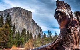 Картинка деревья, скалы, Калифорния, США, коряга, Йосемити, крупным планом