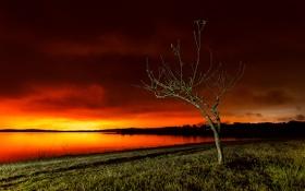 Картинка небо, трава, свет, тучи, озеро, дерево, берег