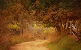 Обои дорога, осень, трава, деревья, забор, фермы