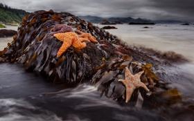 Картинка водоросли, камни, морские звёзды, вода, макро