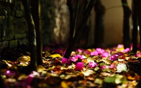 Обои природа, листья, листва