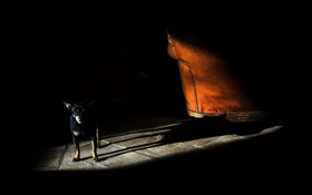 Обои свет, комната, тень, собака