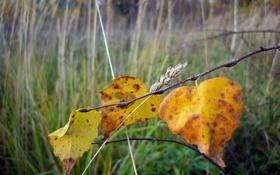 Обои осень, листья, макро, природа