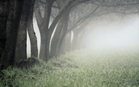 Картинка трава, деревья, природа, дерево, красота, дымка, леса