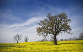Обои поле, небо, облака, деревья, цветы, природа, тепло