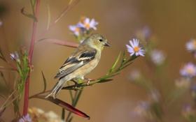 Обои природа, птица, цветы