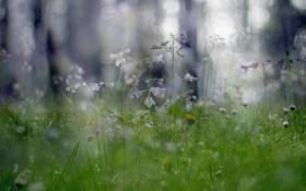 Картинка макро, цветы, природа, растения, боке