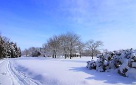 Картинка деревья, дорога, зима, снег, небо, дом