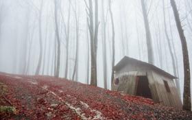 Картинка дорога, лес, туман, дом