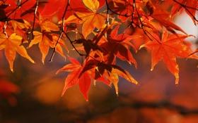Обои осень, ветки, фотографии, осенние обои, дерево, листья, ветви