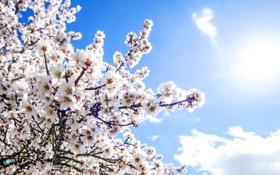 Картинка весна, sunshine, цветение, spring, flowers, blossom