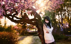 Картинка азиатка, девушка, сакура, настроение