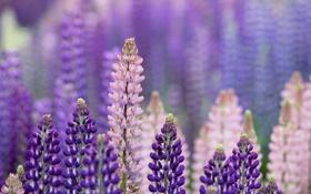 Обои лето, макро, цветы, фиолетовые, розовые
