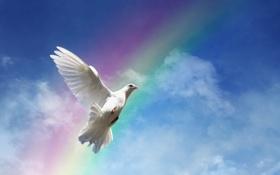 Картинка небо, птица, мир, rainbow, white, peace, sky