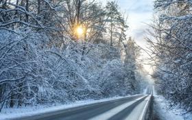 Обои зима, пейзаж, снег, дорога