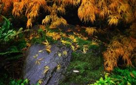 Картинка листья, ветки, камень, мох, растения