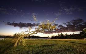 Обои природа, дерево, вечер