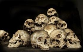 Обои skull, yellow, humans, many bones