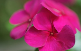 Обои цветок, макро, яркий, фокус