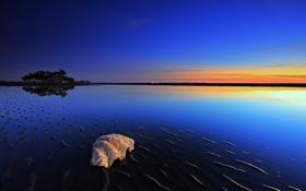 Обои море, вода, деревья, природа, фото, океан, пейзажи