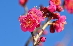 Обои цветение, небо, ветка, сад