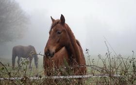 Картинка природа, туман, кони, утро