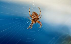 Обои паутина, паук, боке