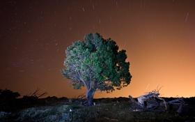 Обои небо, звезды, дерево, вечер
