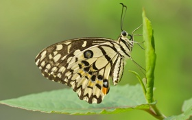 Картинка узор, насекомое, бабочка, мотылек, крылья, лист