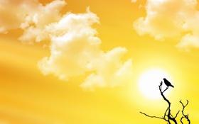 Обои небо, солнце, облака, абстракция, птица, обои, ветка