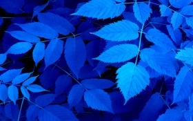 Обои листья, лист, ветка, природа, цвет