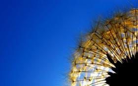 Картинка небо, природа, одуванчик, растение, былинка