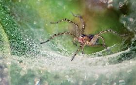 Обои природа, паутина, паук