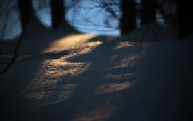 Картинка лес, макро, снег, деревья, природа, тени, macro