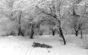 Обои зима, дорога, снег, деревья, природа, trees, winter
