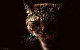 Обои кот, усы, фотограф, photography, photographer, Thirteen