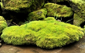 Картинка трава, камни, мох, размытость