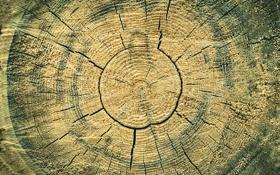 Обои трещины, текстура, кольца, дерево