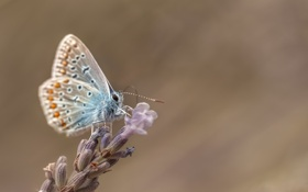 Обои цветок, насекомое, бабочка
