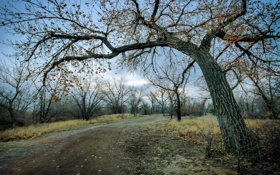 Картинка Colorado, Winter, Riverside Park, Cottonwood Trees