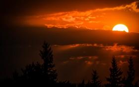 Обои небо, деревья, закат, тучи, солнца